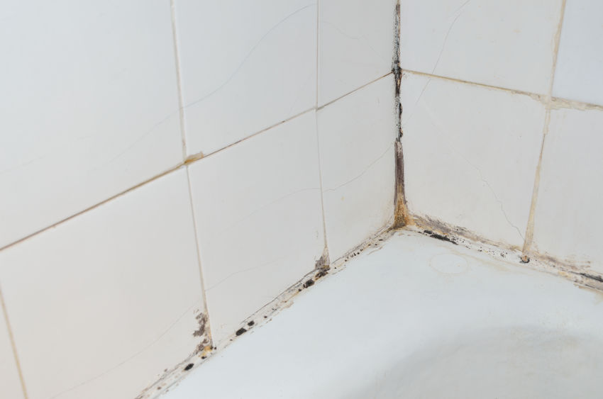 MOLD (Eeew) - How to clean-up mold in the home